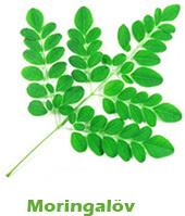 Löv från Moringa oleifera